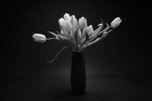 Tulpen - Fotografie
