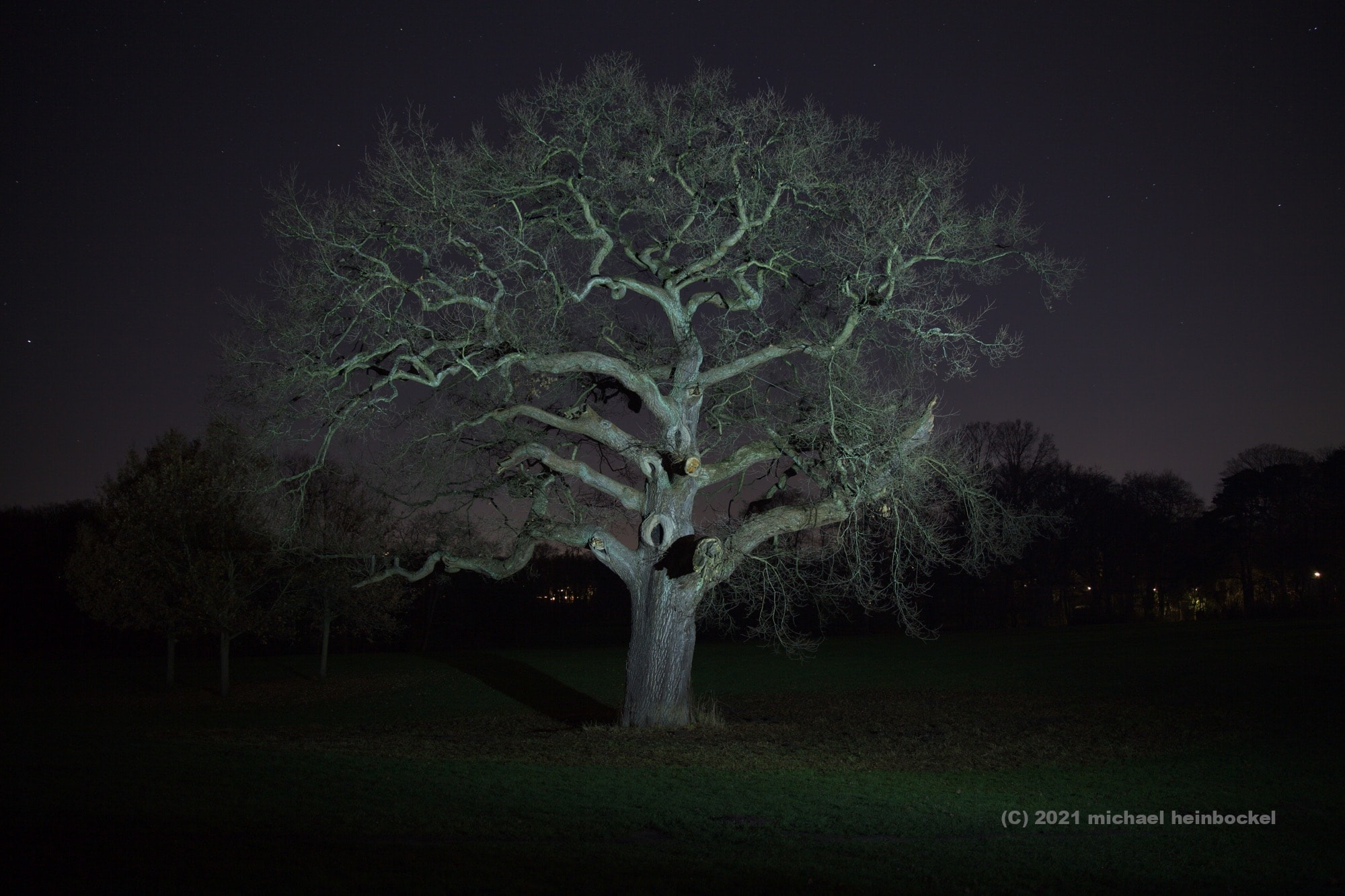 Baum Jenischpark Nacht - Fotografie