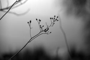 Zweig - Fotografie