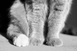 Pfotenkauderwelsch - Fotografie